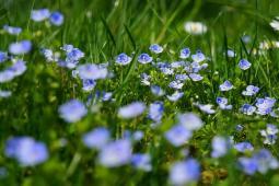 La naturopathie  : Retrouver le sommeil naturellement